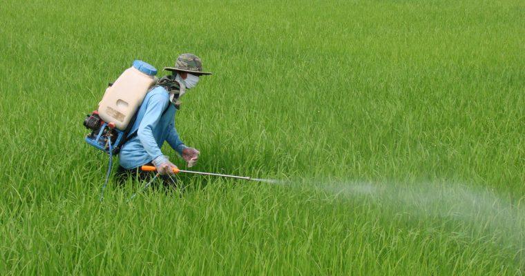 เครือข่ายเตือนภัยสารเคมีกำจัดศัตรูพืช  หรือไทย – แพน : กำลังทำอะไร