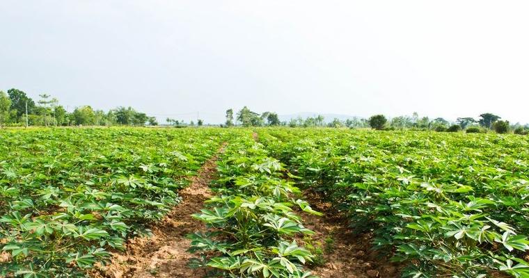 นโยบายเกษตร 4.0