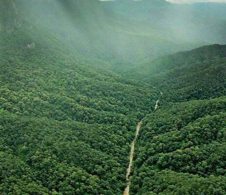 ป่าสักนวมินทรราชินี